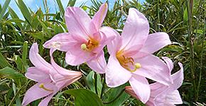 ネイチャートレイルの山旅・花旅
